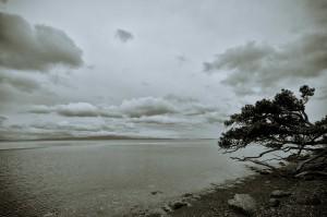 trübe Küste